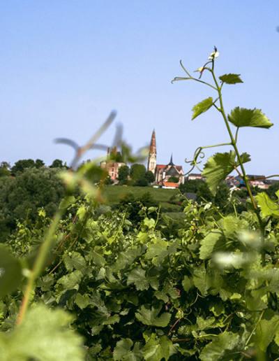 Saumer-Vin